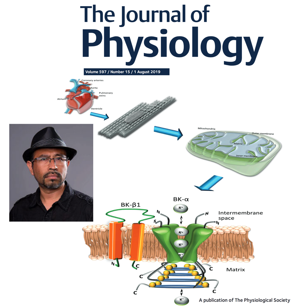 Congratulations to Enrique Balderas (CVRTI Research Associate) and his colleagues for their August 2019 publication featured as the cover page of the Journal of Physiology.