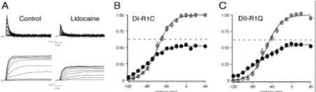 Dr. Sheets defines the molecular basis of lidocaine's effect on sodium channel gating