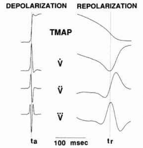 Relationship between ventricular action potential duration and electrograms